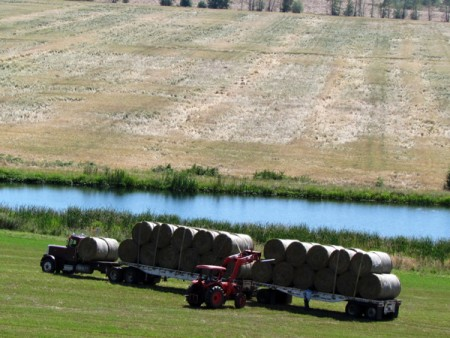 Farm-bales-truck