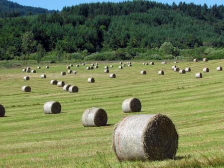 Farm-field-3401