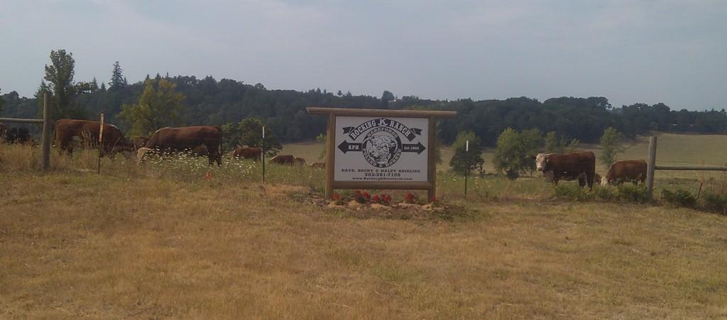 Ranch photos (replace calf)