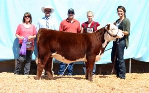 2012 Class Winner Calf Champion Oregon State Fair KPH Paprika 18Z ET