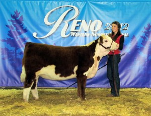 2012 Class Winner Western Nugget National Hereford Show KPH Keno Time 8Z