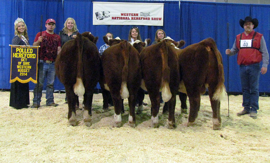 Show Success 2014 Get of Sire crop