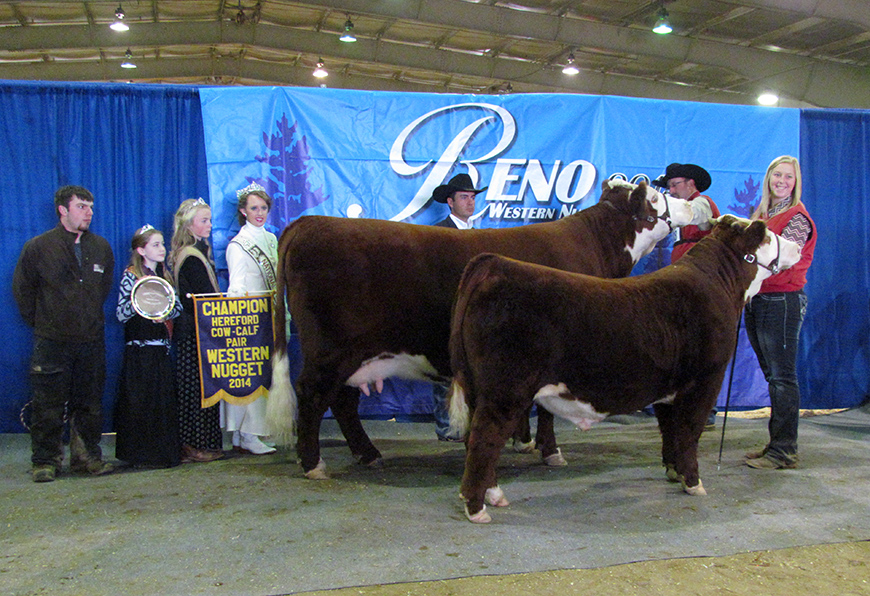 Show Success 2014 Reno Cow Calf Pair crop